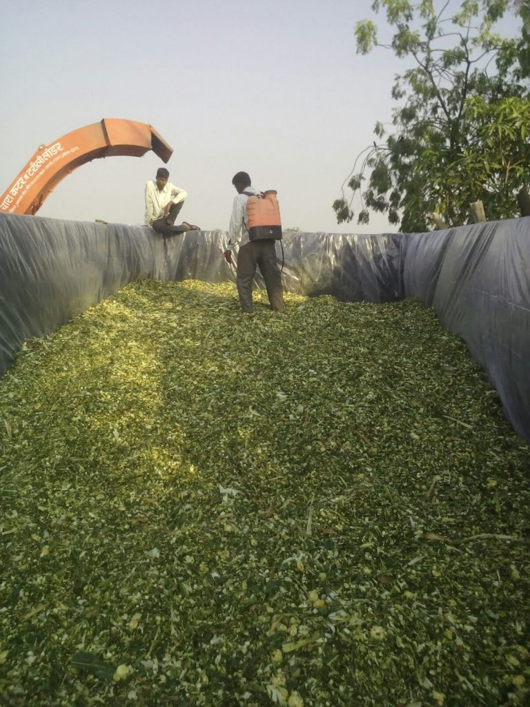 indian-silage